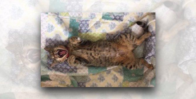 片目が壊死した2ヵ月の子猫、センターからわが家へ