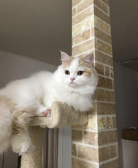 キャットタワーを設置するメリットとは?猫にとって意味はあるの?