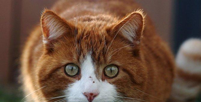 『人が苦手』な猫がする仕草4つ!信頼してもらう方法とは?