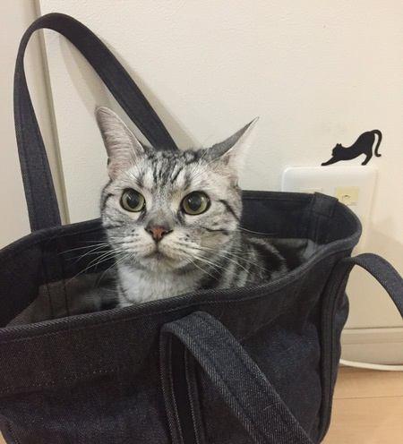 【あるある】猫って察しがいい…!と思う瞬間4つ