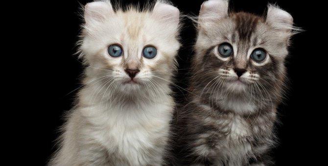 猫が「敵」と感じてしまう人の7つの特徴