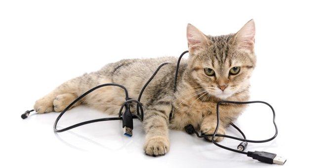 猫がコードを噛む3つの理由と対策