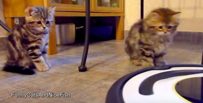 困惑する子猫がかわいい♡はじめての自動掃除機体験