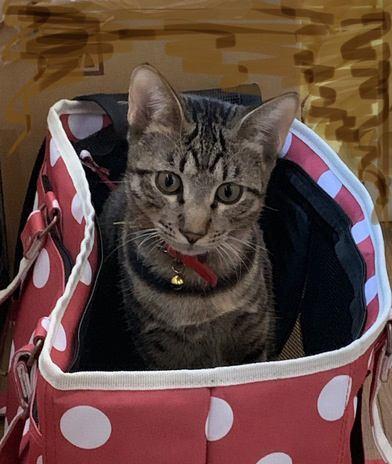 猫を「キャリーバッグ」に入れるコツ5つ!必死の抵抗を上手に回避