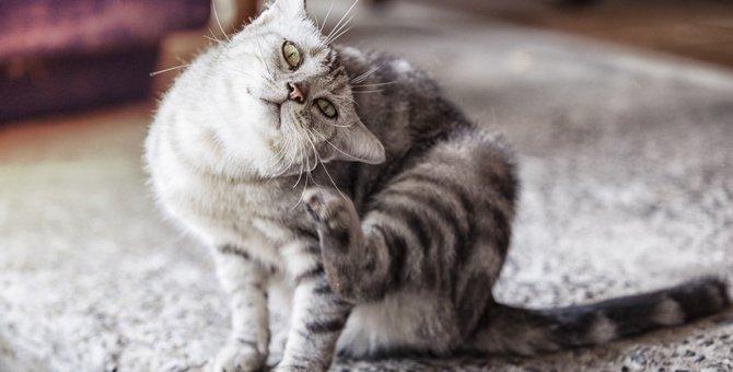 【怖い】マダニのシーズン到来!猫のためにできる予防法4つ