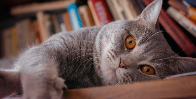 猫のためにできるDIYの方法やアイディア17選