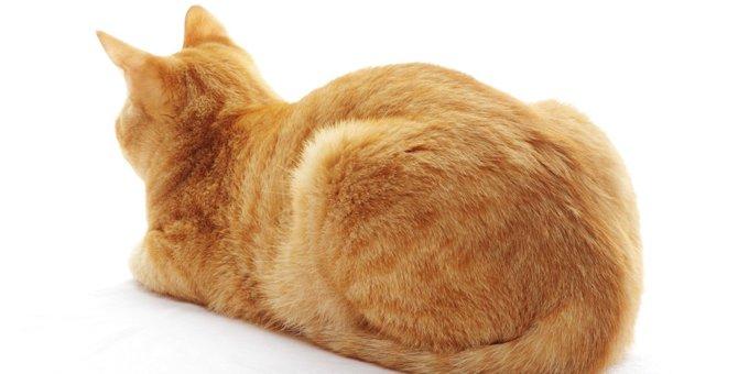 猫のおならって聞いたコトある?頻度が多いと注意が必要