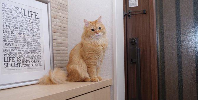 猫が飼い主に送る『寂しいサイン』3つ