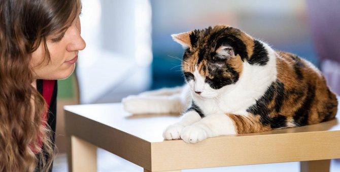 猫に『ダメ』を教える方法5つ