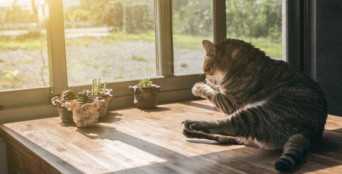 ペットロスの仕組みとは?愛猫を喪い悲しんでいる人への接し方