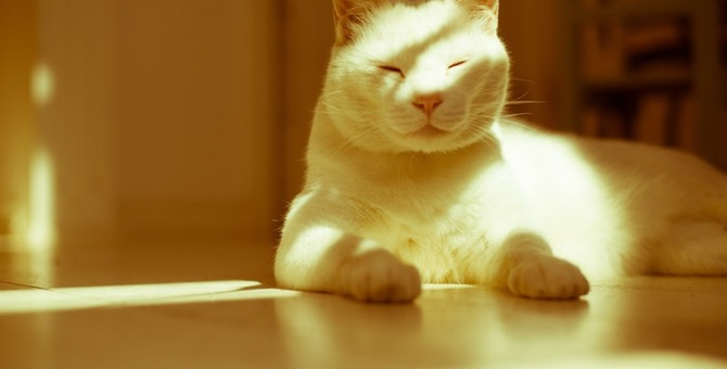 猫がずっと寝ている理由や疑う病気