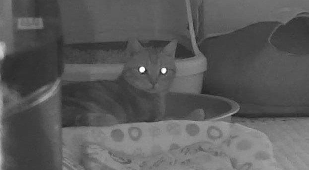 猫が朝早く飼い主を起こす5つの理由