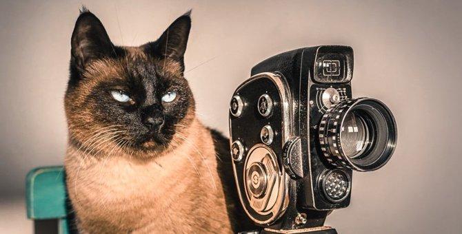 怖いの?猫にカメラを向けると顔を背けてしまう理由3つ