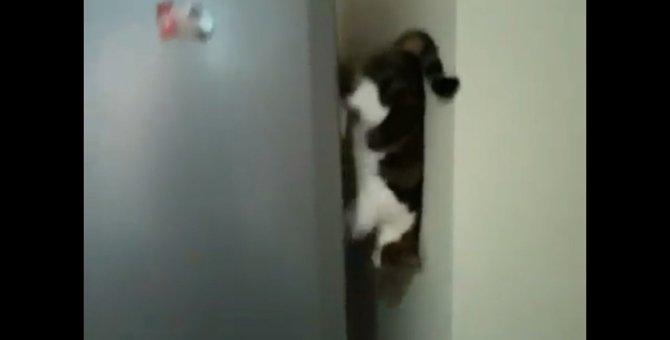 「今そっちに行くにゃ!」降り方のクセが強い猫