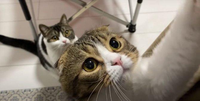 ここにあるおやつをください!おねだりが可愛い猫さん♡