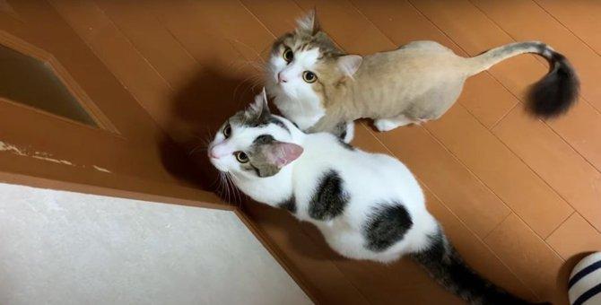 「開けドア」が通用しなくなった猫ちゃんたち
