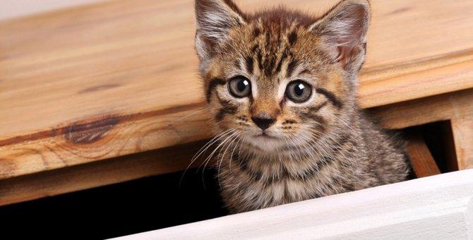 【閉じ込め厳禁】子猫が入り込みがちな場所5つ【命の危険も】