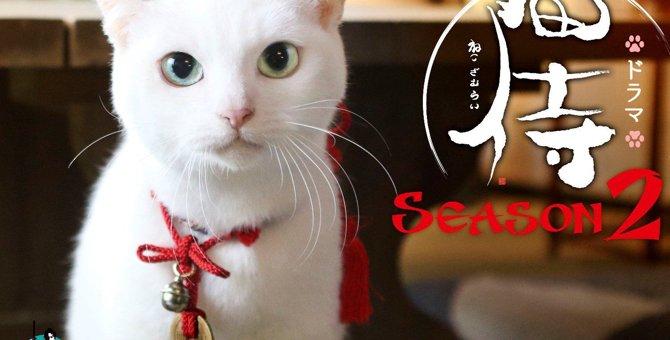 タレント猫「あなご」の誕生秘話から出演作品まとめ