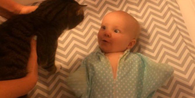 はじめてのともだち!猫を見て興奮が収まらない赤ちゃん♡