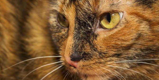 サビ猫は「汚い柄」?魅力的な性格を知ればそんな事は言えません!