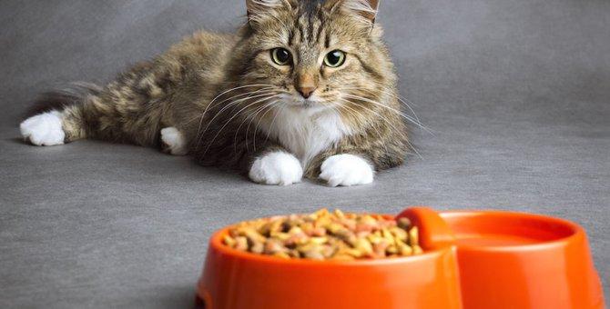猫のフードおすすめ商品11選!選び方や安全な物