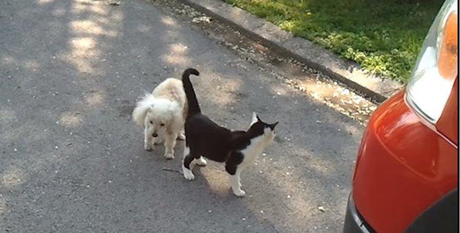 """盲導犬ならぬ""""盲導猫""""!?目の見えない犬を誘導する猫ちゃん"""