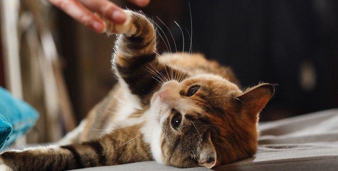 猫が『んーと鳴く』時のシチュエーション3選