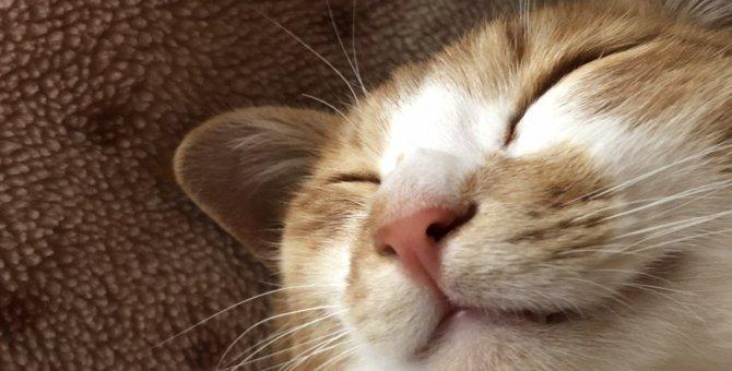 『心が満たされている猫』だけがみせる仕草4つ