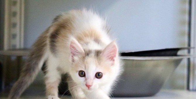【あるある】猫のテンションがあがった時の行動5つ