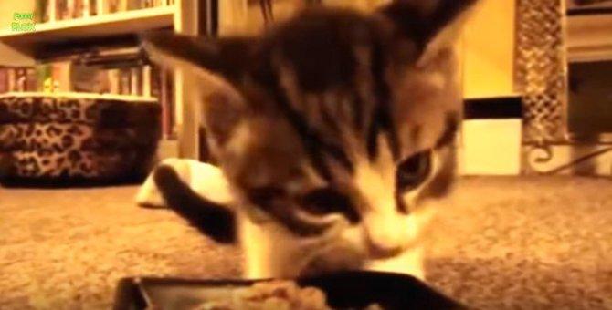 可愛すぎ♡おしゃべりしながらごはんを食べる猫たちの動画集※音出し推奨