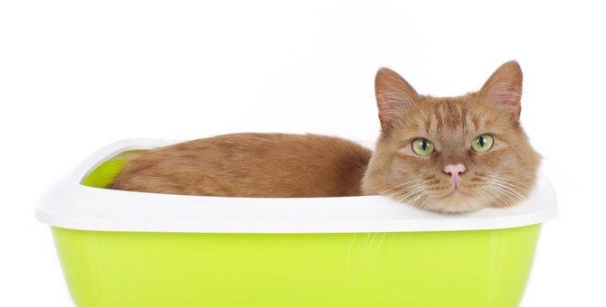 猫がトイレで寝てしまう3つの理由と対策