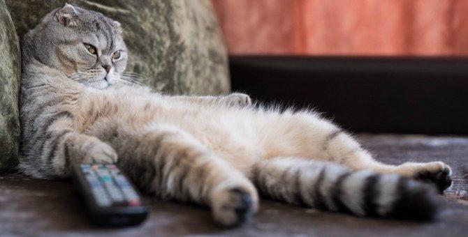 運動不足気味な猫の特徴と解消する方法3つ