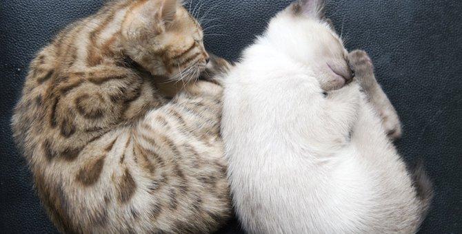 丸い猫たちの可愛い画像10選