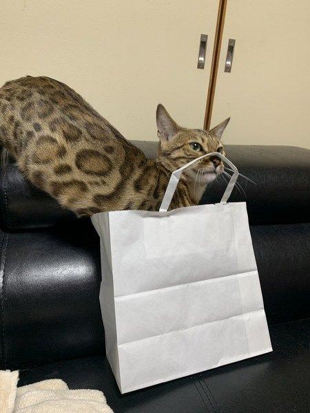 猫の探究心をくすぐる!「フードパズル」で楽しく健康に♪