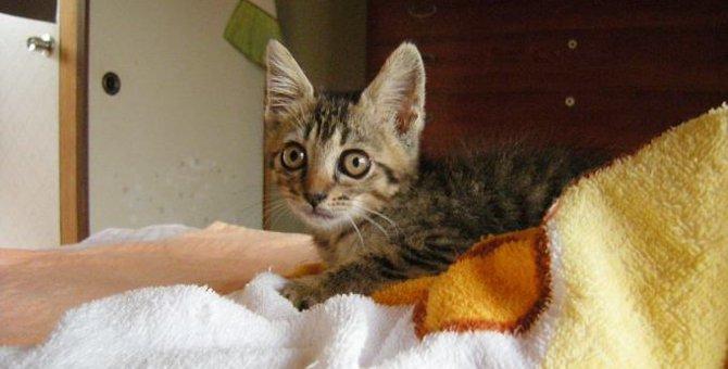 用水路に落ちてもがく子猫…緊急保護し幸せな家猫へ!