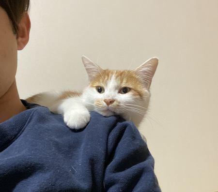 猫がついついしちゃっている『だいすきサイン』5つ