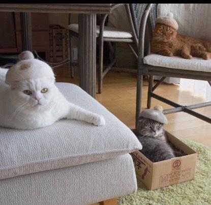 ねこかぶりとは?猫の抜け毛帽子のかわいい画像集!