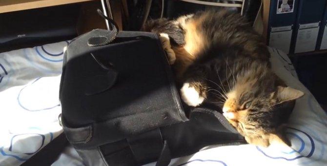 飼い主さんの匂いがする♡カバンに魅了された猫ちゃん