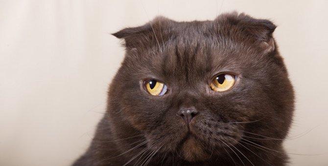 猫が飼い主に『不満』を感じている時の仕草4つ