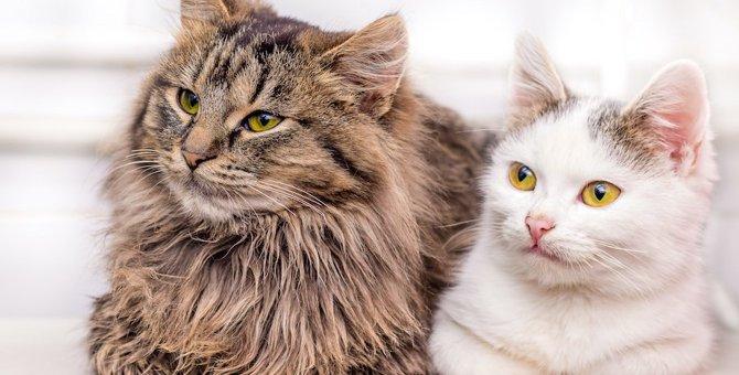 猫のアンダーコートの見分け方とおすすめブラシ4つ