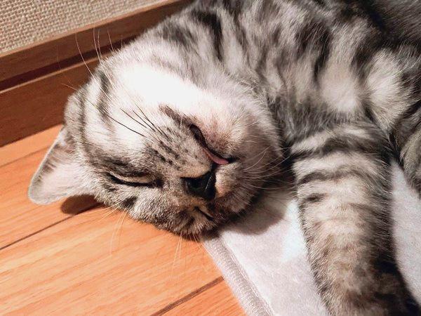 猫が一緒に寝たがる人の特徴とは?3つの共通点