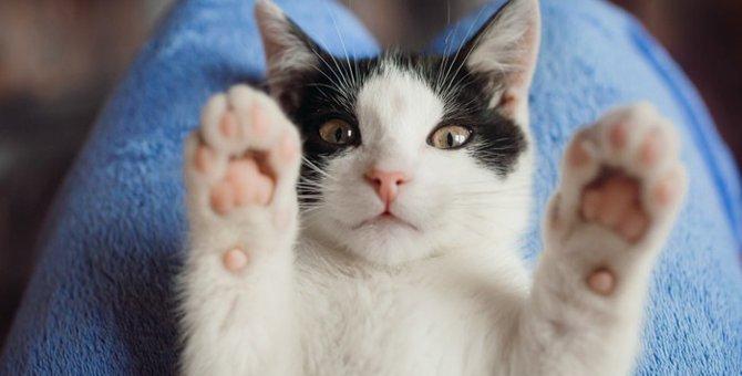 猫の巻き爪の症状と注意点