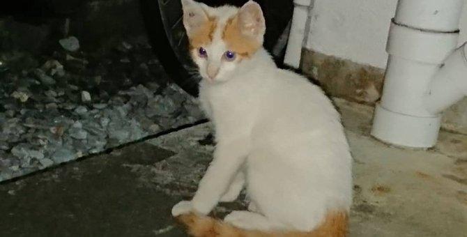 他の猫から拒否され孤独だった子猫を保護。甘ったれなイケメンに成長中!