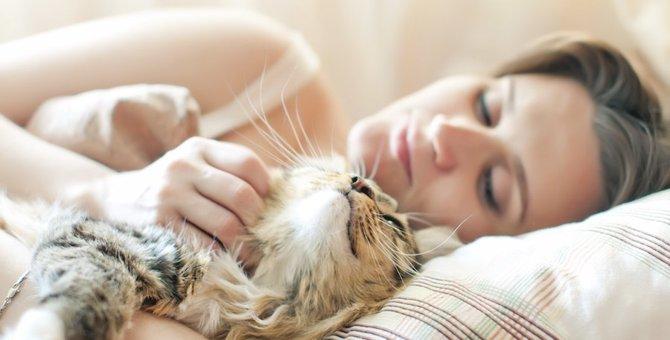 猫が朝甘える6つの理由