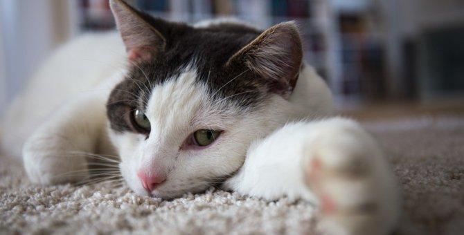 猫の掘る仕草に隠された3つの理由