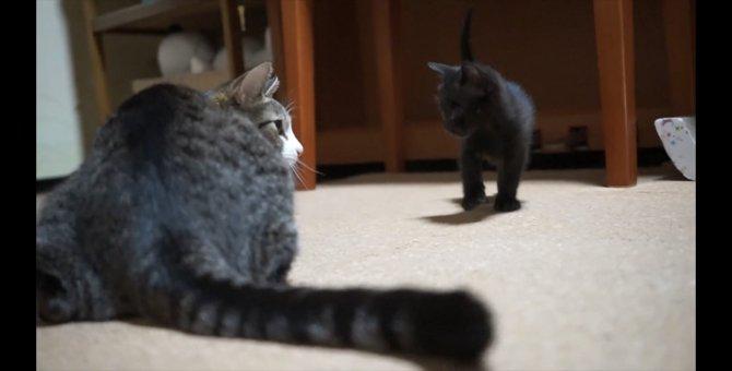女王の恐ろしさをまだ知らない頃の子猫たち