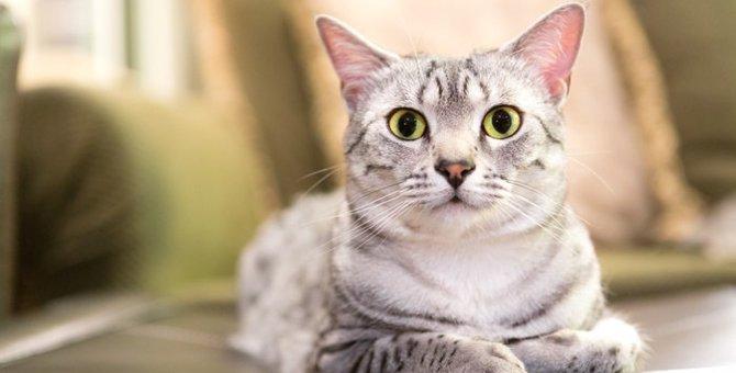 猫の妖怪…世界中にいる猫にまつわるモノノケのお話