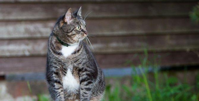 オス猫の特徴とその性格についての注意点