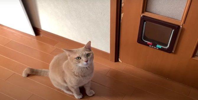 『やっぱり嫌だぁ〜』猫ちゃんの譲れないプライド