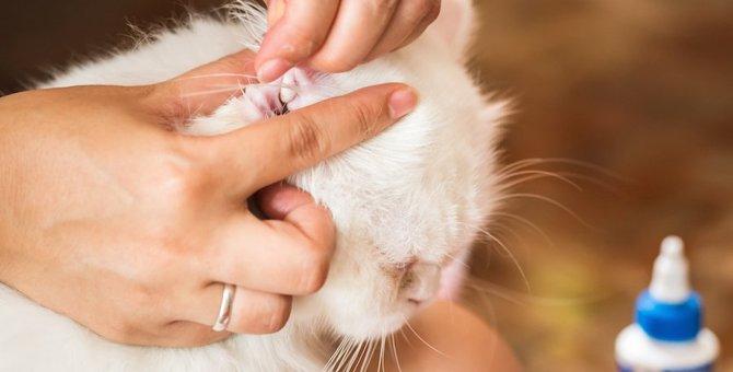 猫の耳が臭い時の対処法、考えられる病気